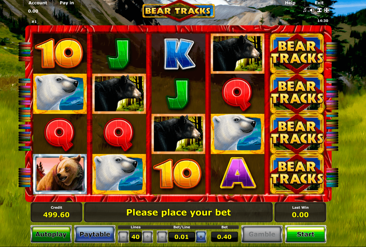 bear tracks novomatic slot
